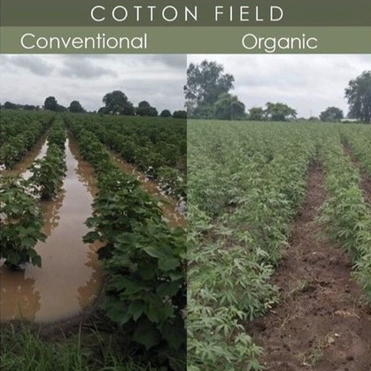 biologisch versus konventionell